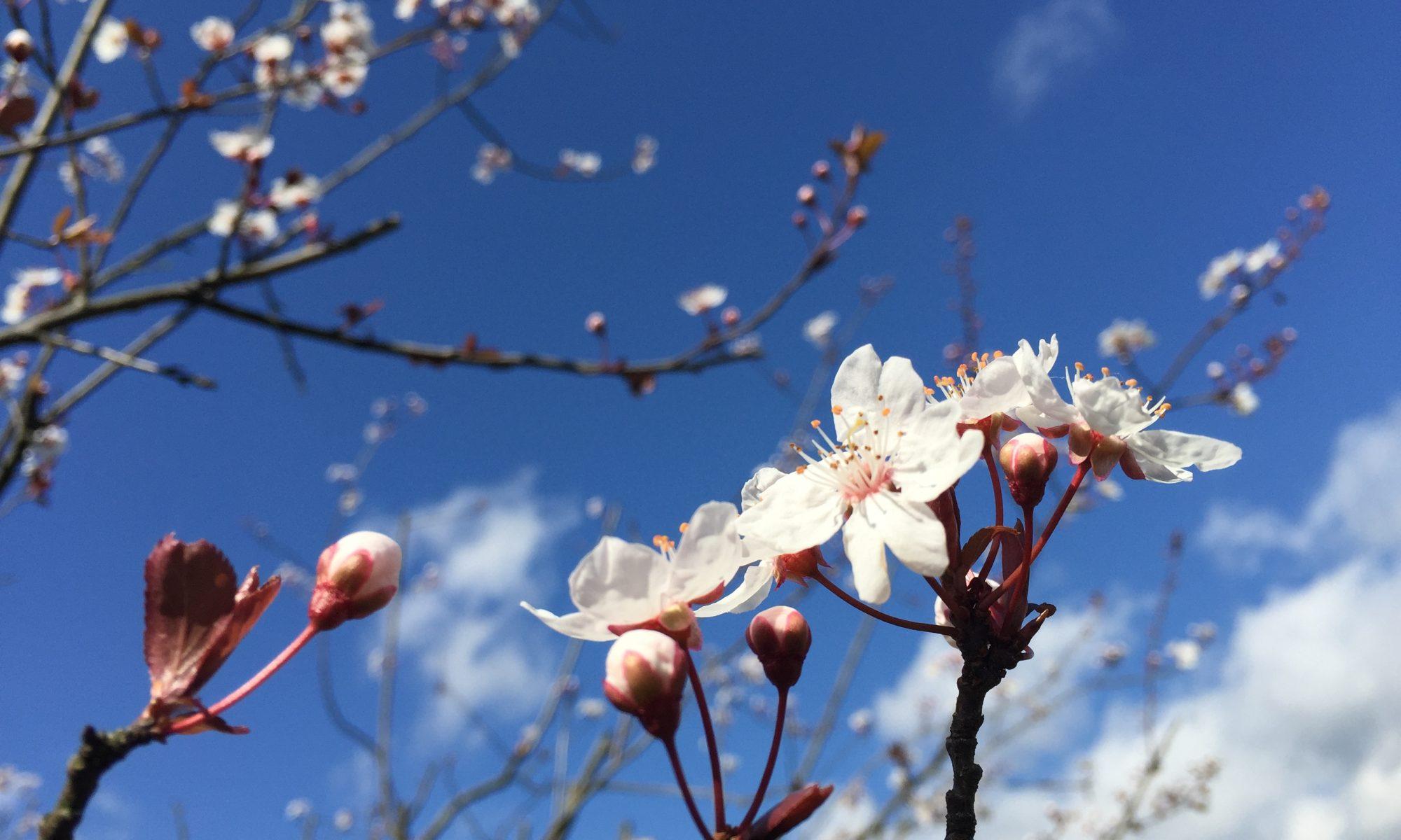 Primavera a Firenze